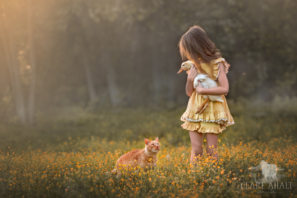 Photograph of a child in a field of buttercups with a ginger tabby cat and a peking duck ducking, photographed on location in Potomac MD by Clare Ahalt Photography, a fine art photographer located in Maryland serving clients in Maryland, Virginia and Washington DC.
