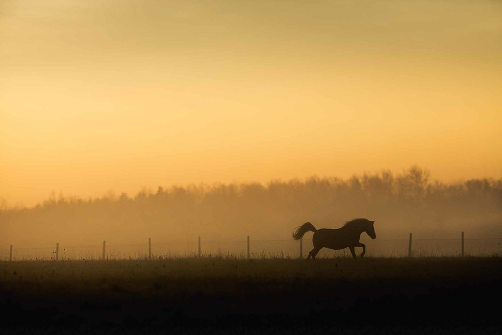 best_equine_photographer_potomac_MD_professional__Equine_photographer_frederick_MD.jpg