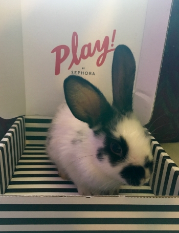 This cute little girl loves that the Play! by Sephora box matches her!  She is a 6-week-old Mini Satin.
