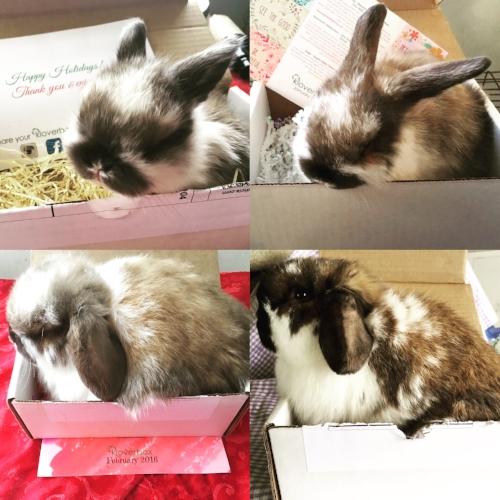 Eleanor in the December 2015 Kloverbox (top left), January 2016 Kloverbox (top right), February 2016 Kloverbox (bottom left), March 2016 Kloverbox (bottom right).