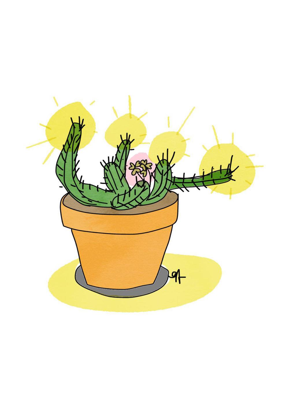 Sunny Cactus