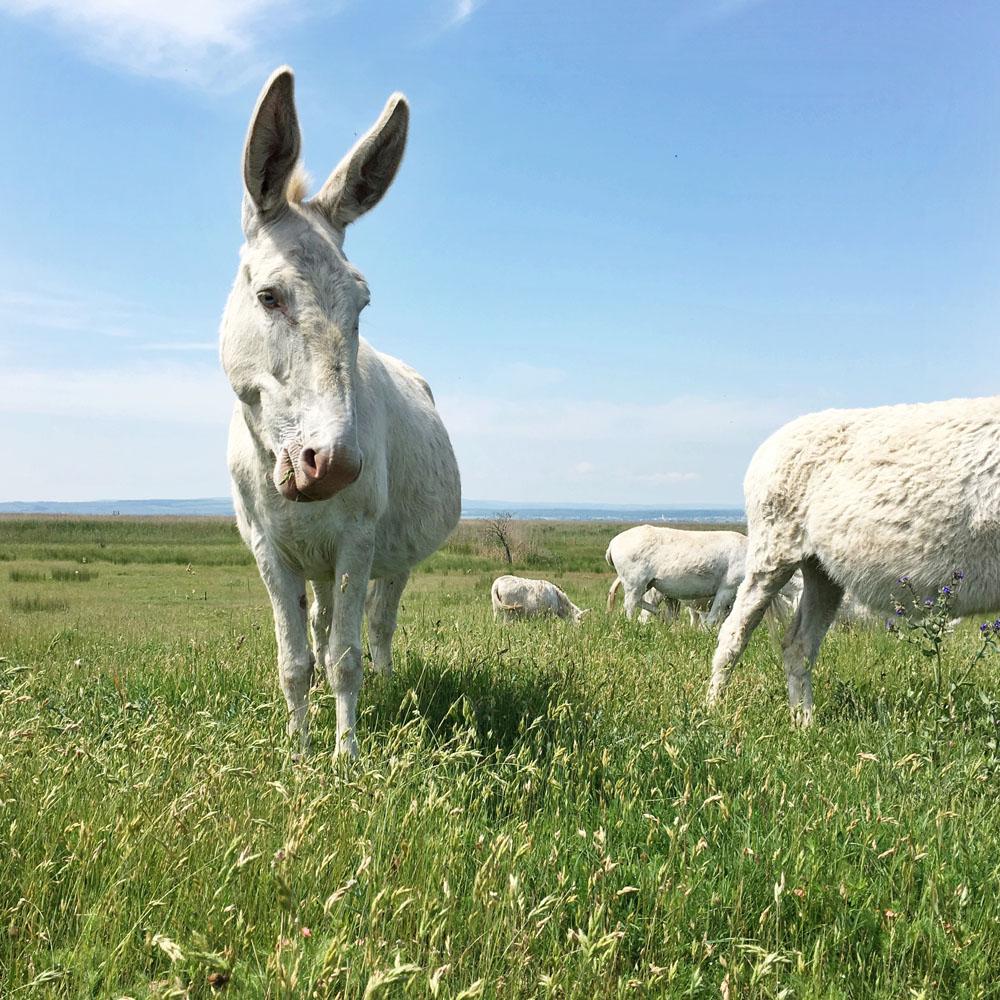 donkey 1.jpg