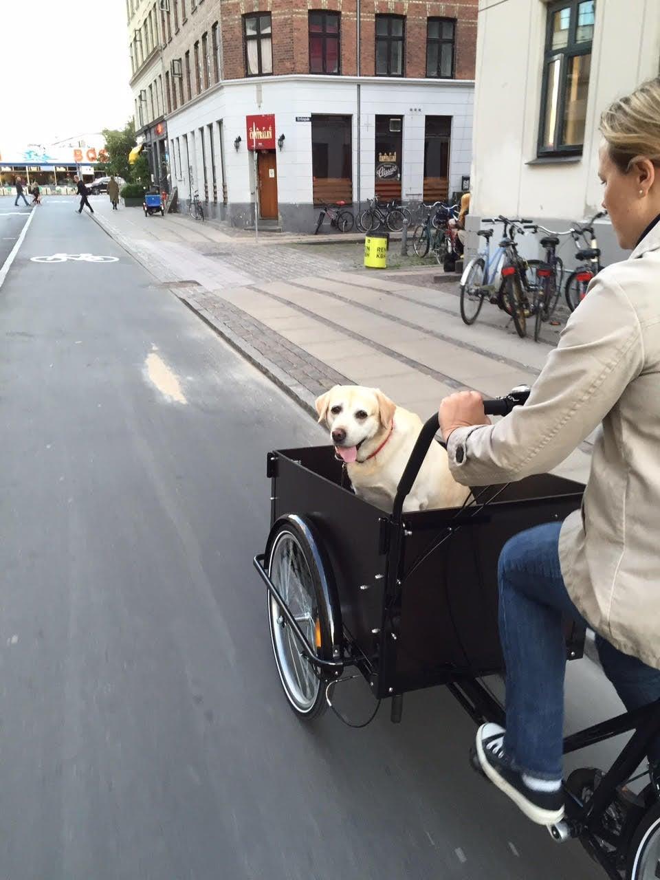 My friend's super-cute dog is enjoying the ride!
