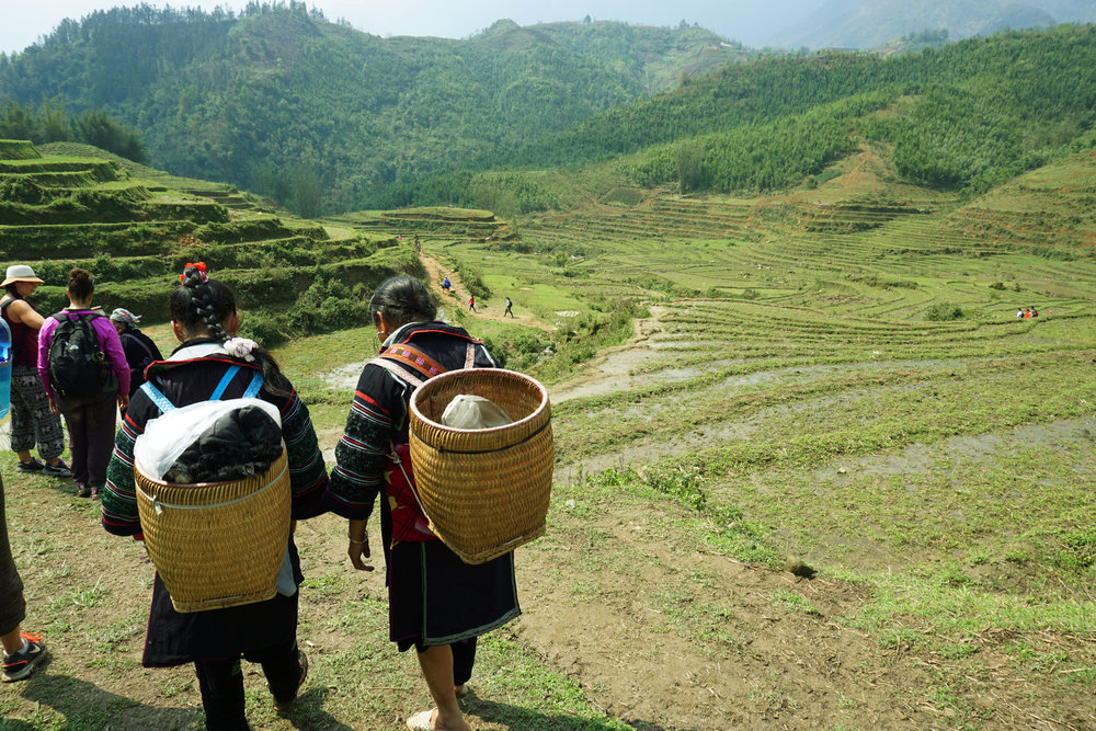Hiking with Hmong women through rice fields, Sapa