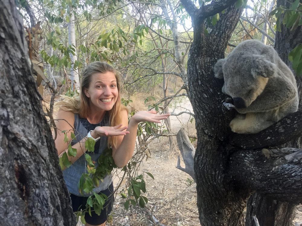A sleeping koala!