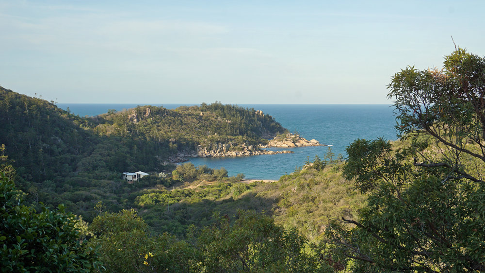 The view from the Forts Walk hike, where you have a good chance of spotting wild koalas