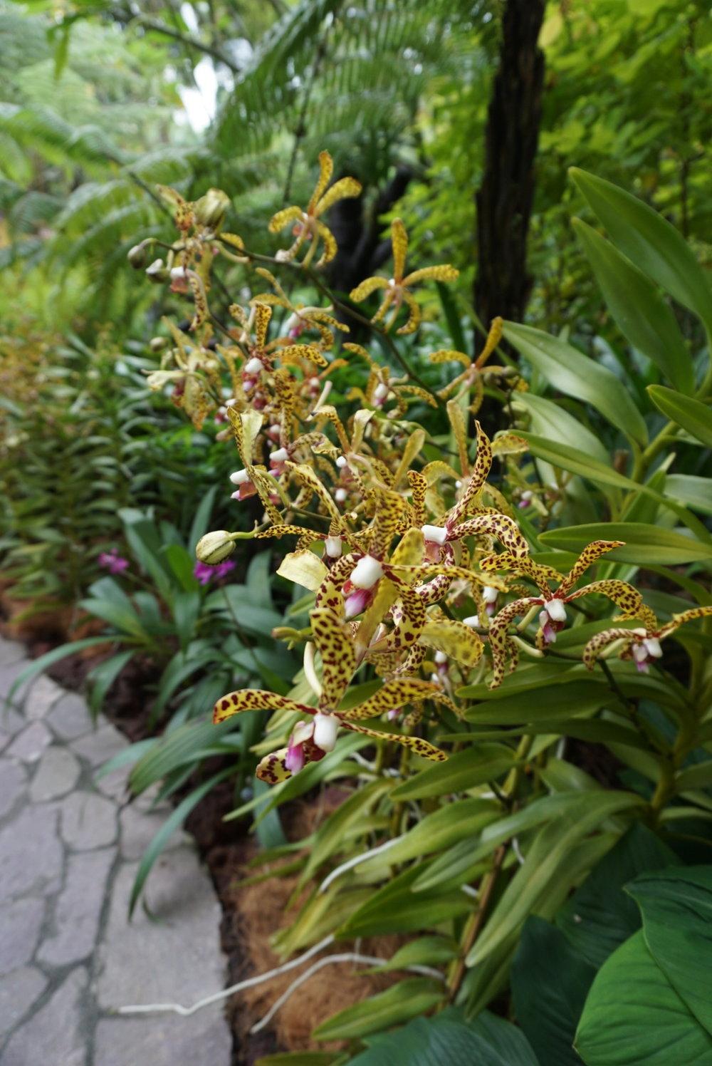 garden5b.JPG