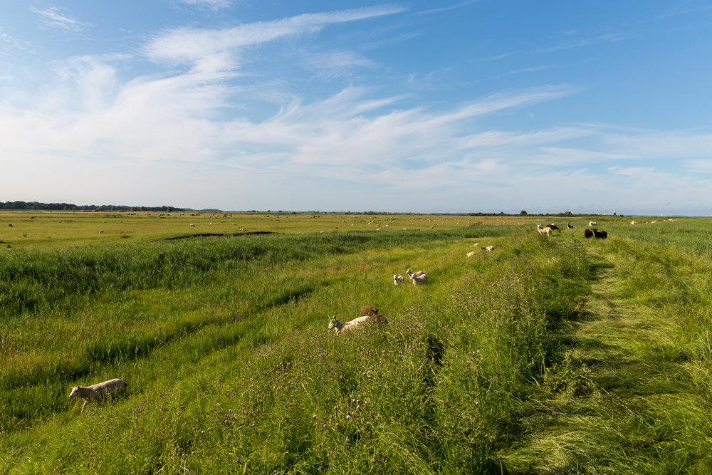 Waveney Path