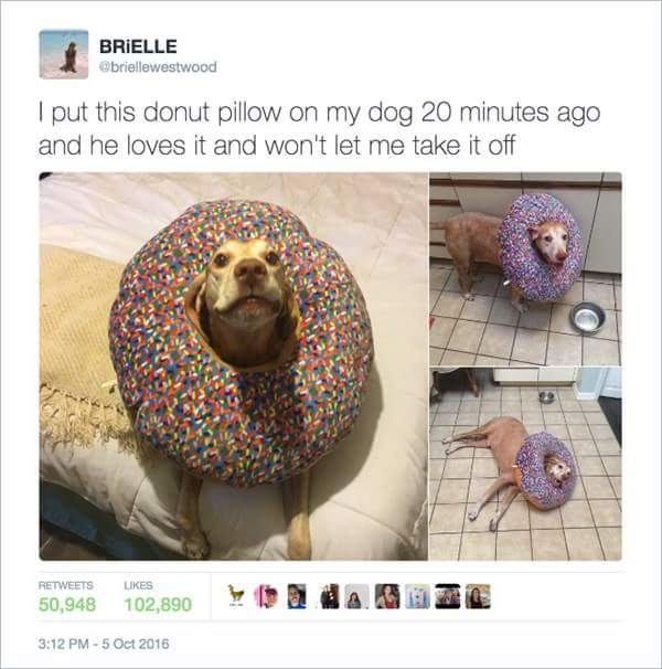 THIS DOG AND THIS PILLOW IS LIFE.
