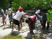 Mangrove planting.jpg