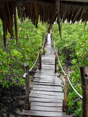 the Mida Creek boardwalk