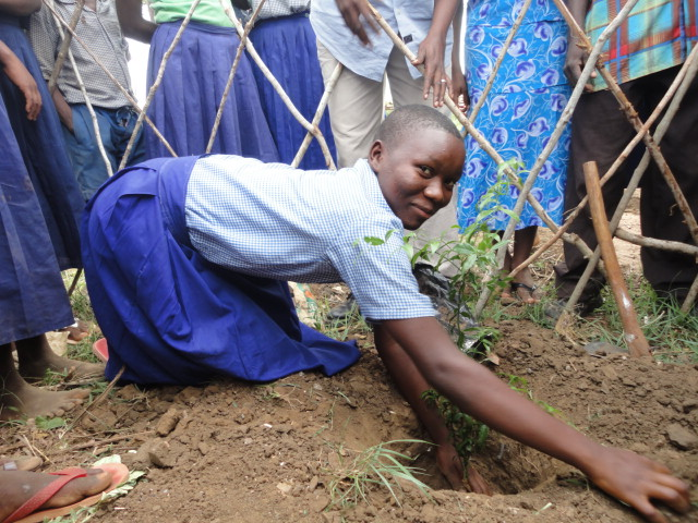 Mapenzi, a pupil planting one of the tree seedlings