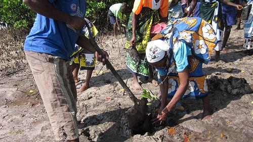 Community members planting mangrove seedlings