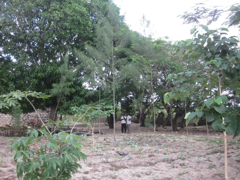 Mijomboni - teacher's field