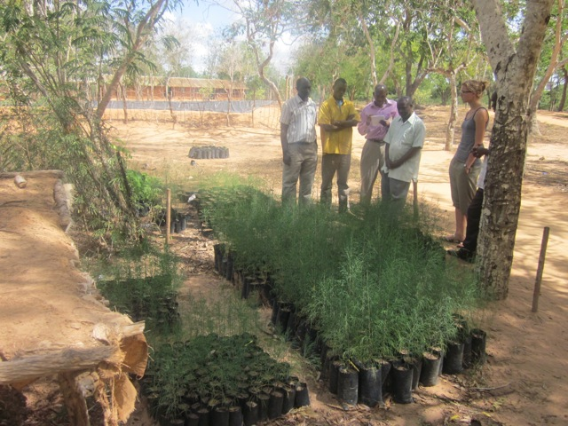 The Boga Matchuko tree nursery