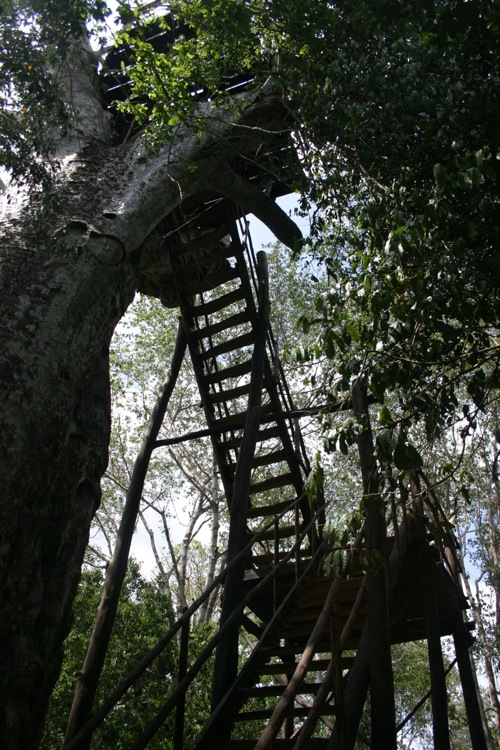 Gede Ruins Tree Platform
