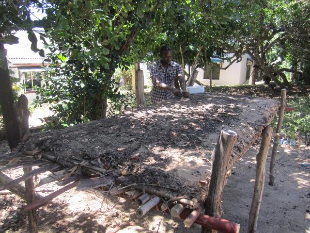 Tree nursery underway