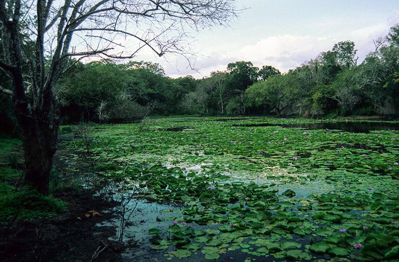 Arabuko-Sokoke-Forest T