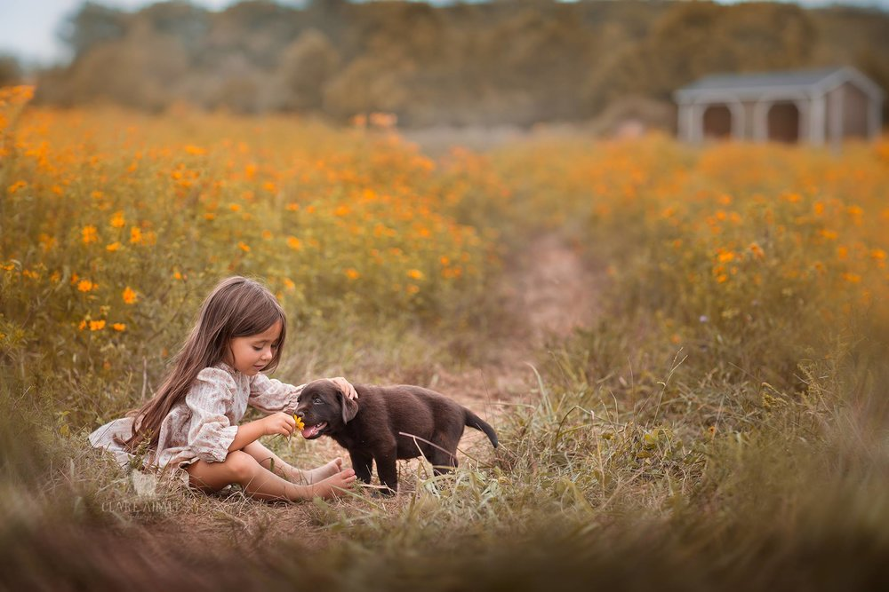 portrait of a little girl with a healthy chocolate labrador puppy, cared for by the veterinarians at Jefferson Veterinary Hospital, an animal hospital located in beautiful Frederick county MD.