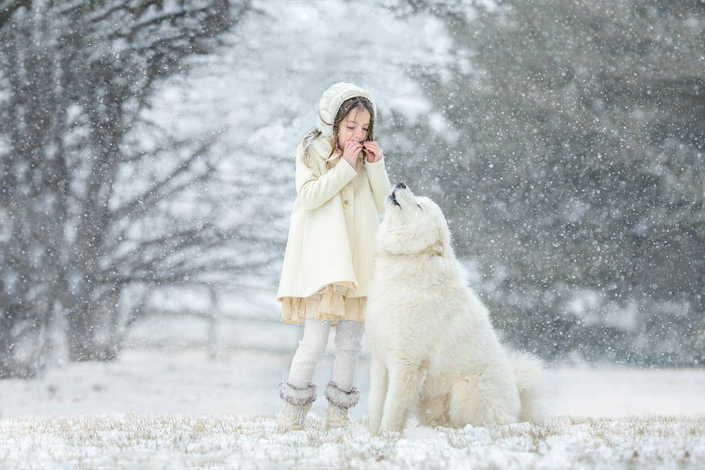 best_pet_portrait_photographer_maryland_samoyed_snow_howling.jpg