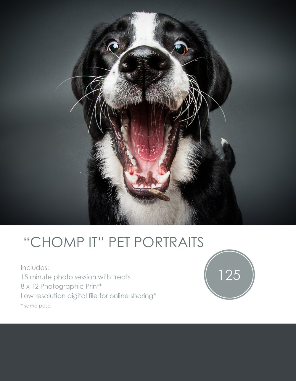 pet portrait of a dog catching a treat