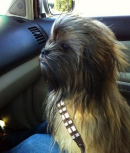 Chewbacca Dog!! (thanks Buzzfeed!)