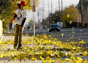 Winds! (courtesy of LA Times)