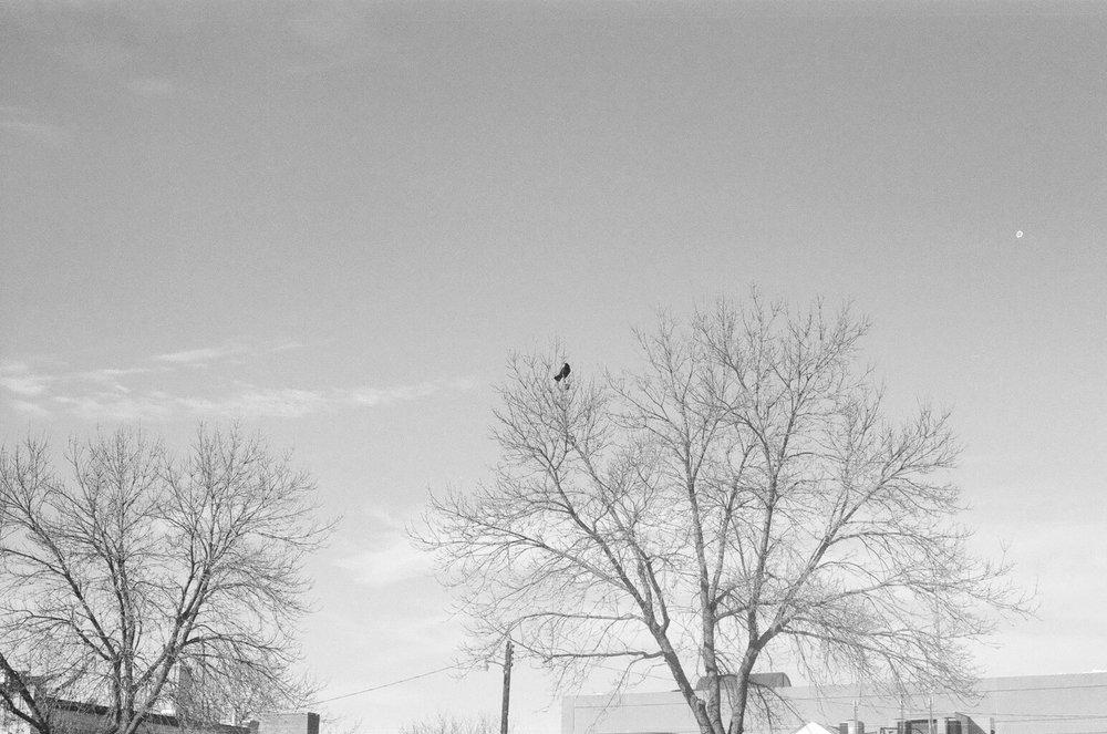 noah bird.jpg