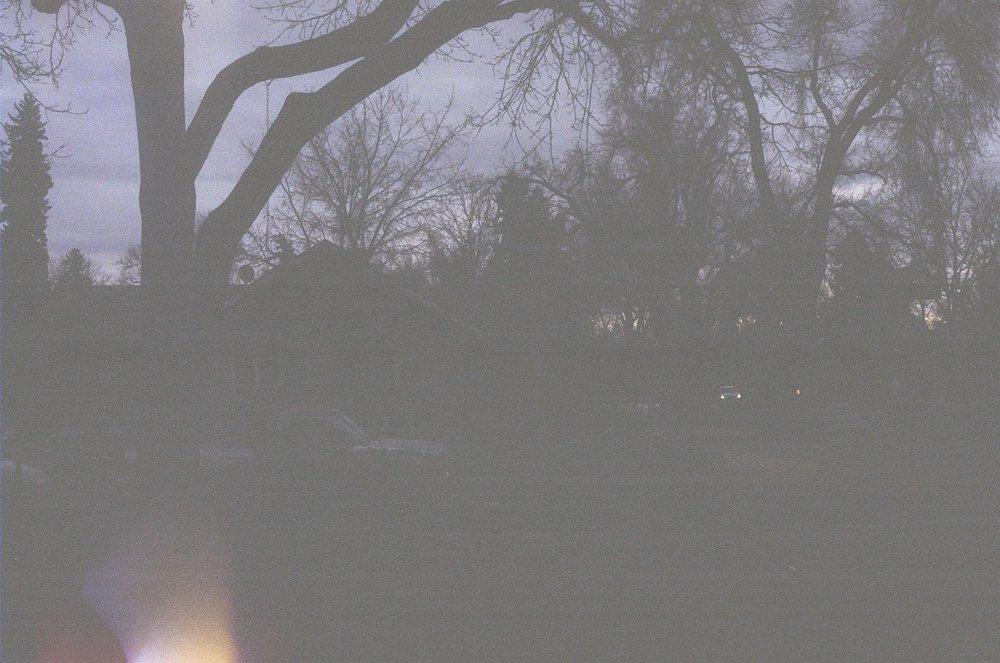 Hazy Trees Noah Film