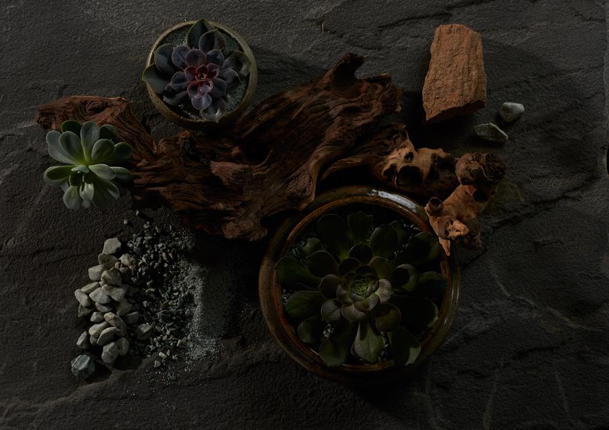 Botanicals_2.jpg