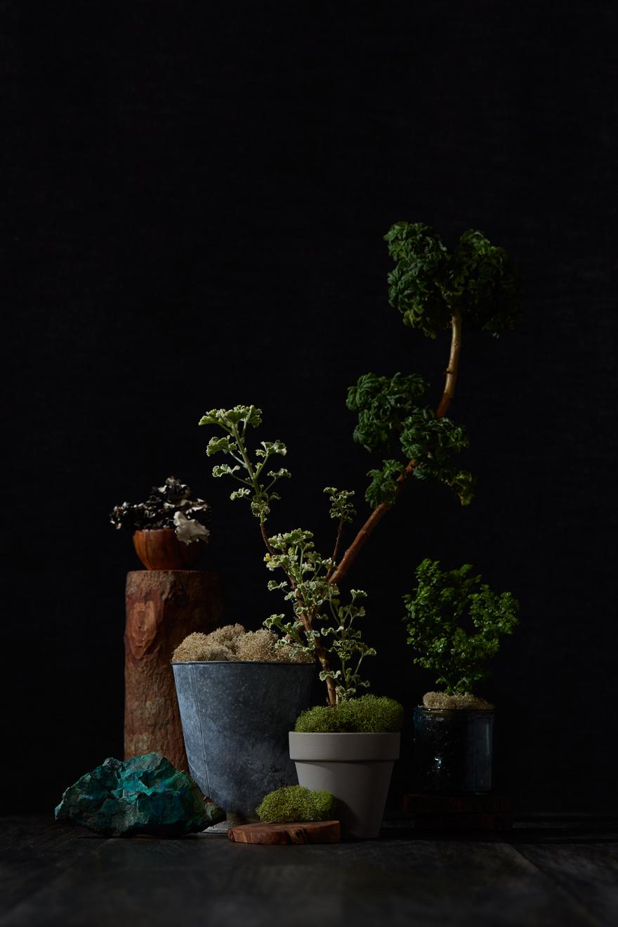 Botanicals_3.jpg