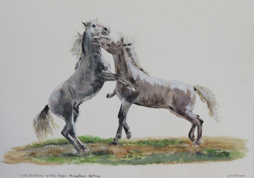 Wild Stallions, watercolor and gouache on Arches, 11 x 15.5 inches