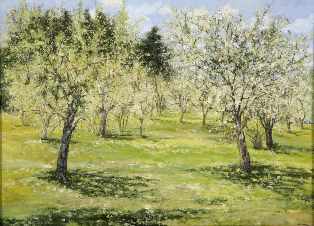 Orchard of Almond Trees, oil on canvas, 24 x 36 inches