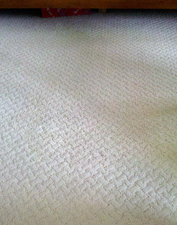 After:  Professional stain removal by ACS Carpet Cleaning.