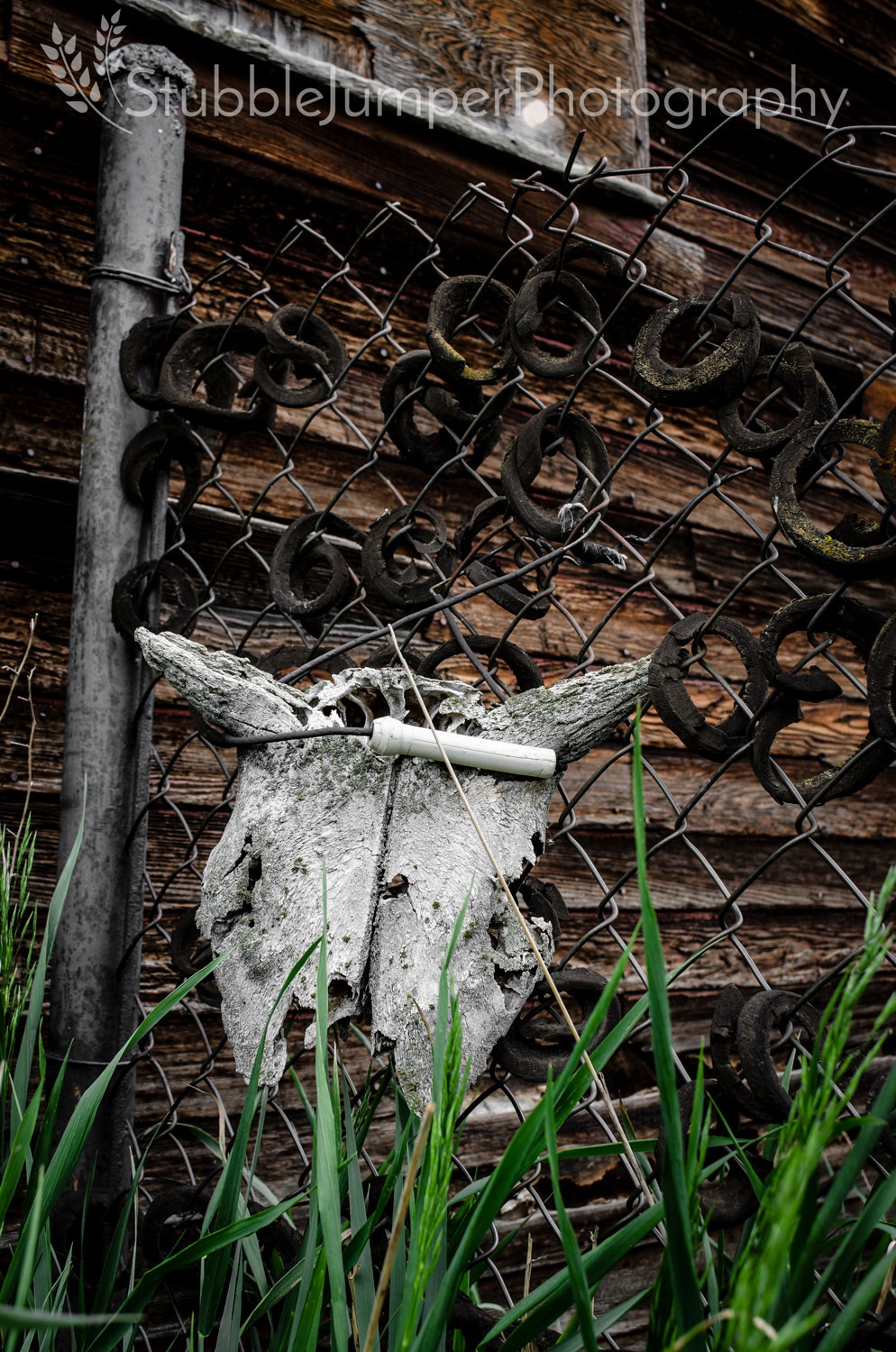 Brothers Skull Fence