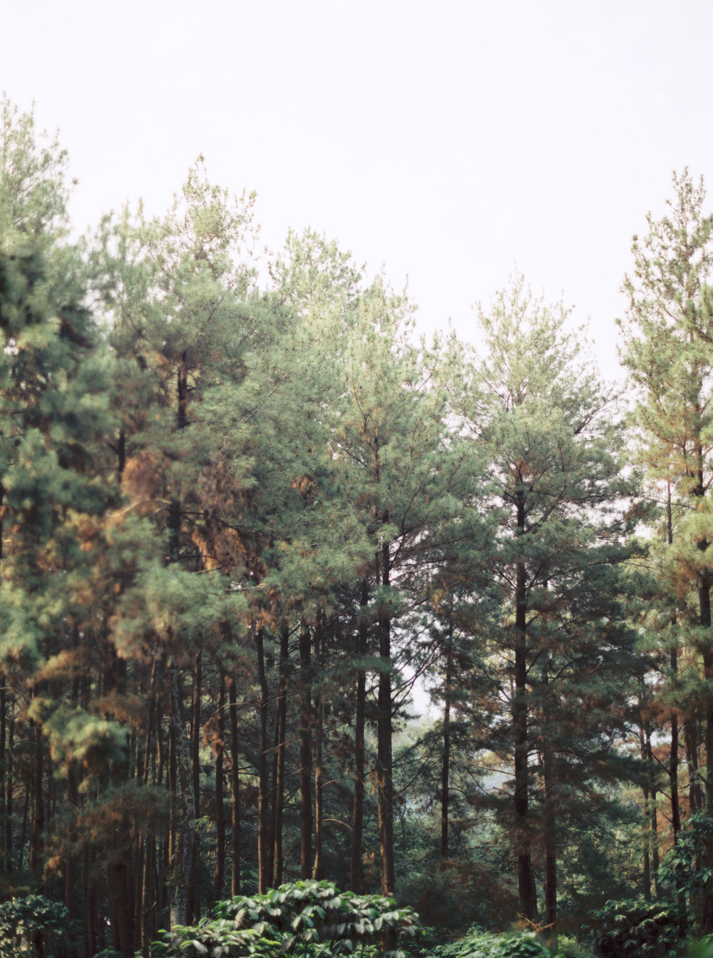 1-nature-outdoor-forest-prewedding-jakarta.jpg