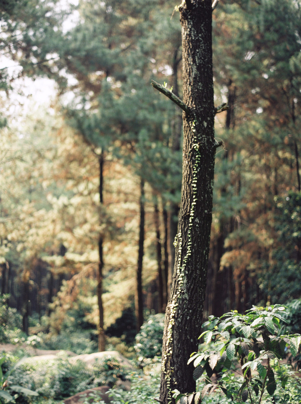 2-nature-outdoor-forest-prewedding-jakarta.jpg