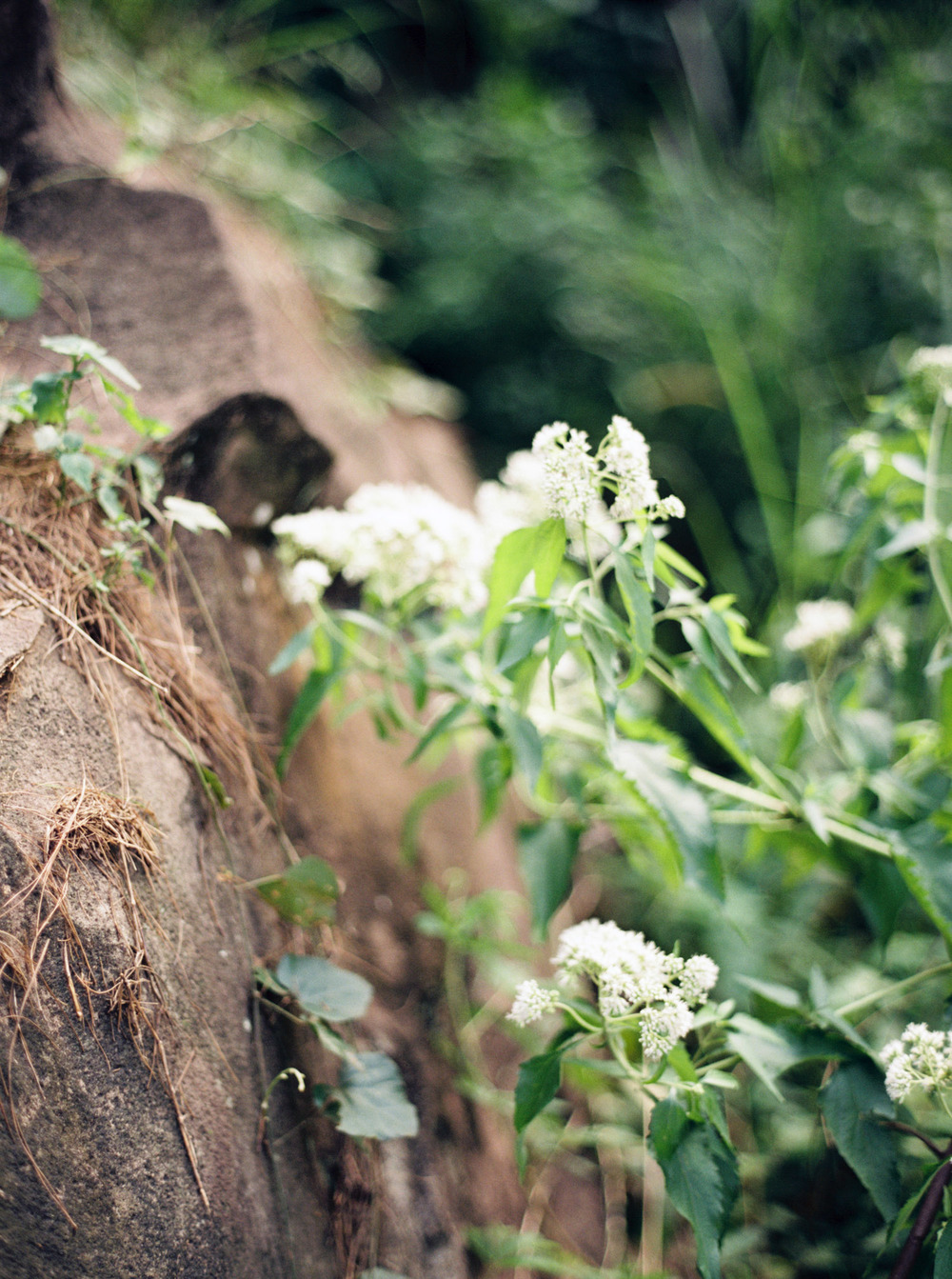 14-nature-outdoor-forest-prewedding-jakarta.jpg