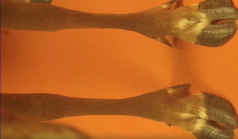 hoofs 2.jpg