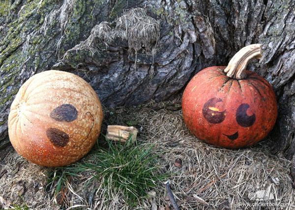 Pumpkin Decay1