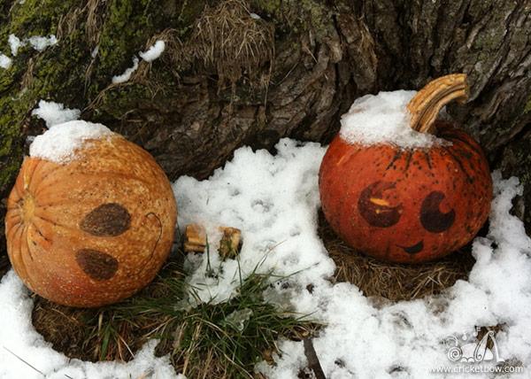 Pumpkin Decay2