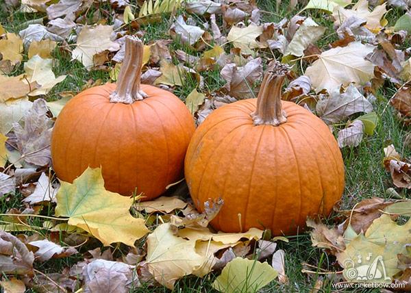 Pumpkin Decay