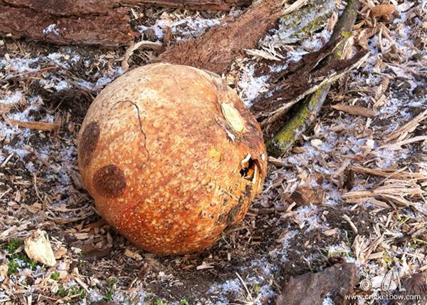 Pumpkin Decay5