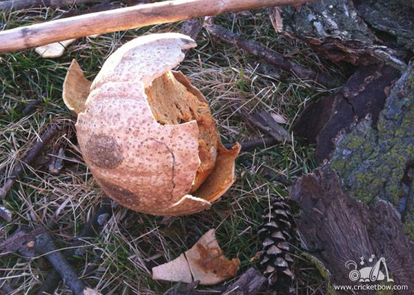 Pumpkin Decay7