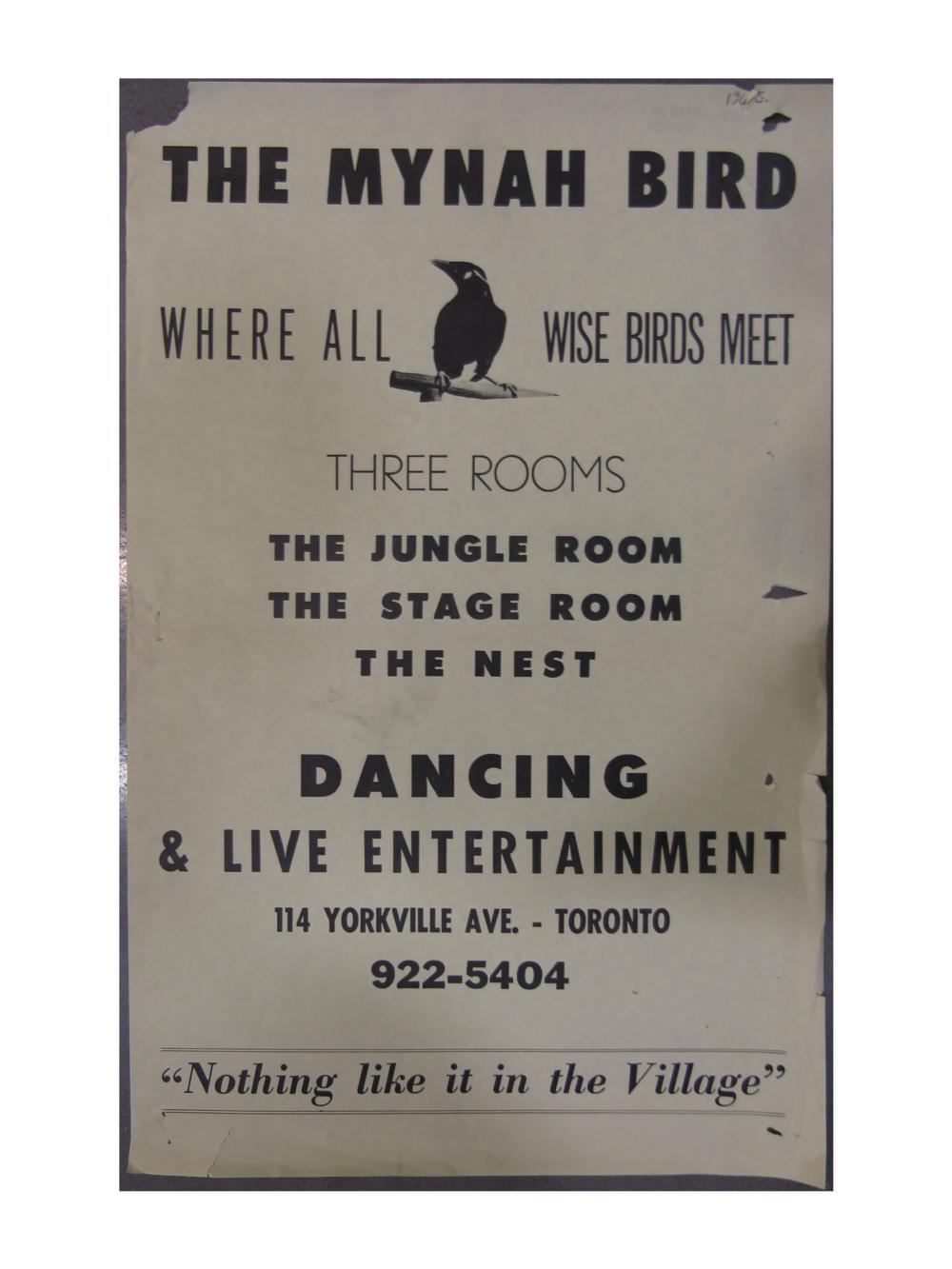 mynah-bird.png