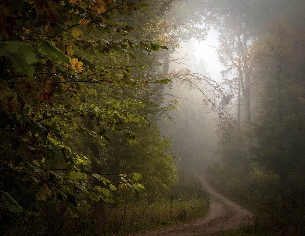 mgły4b.jpg