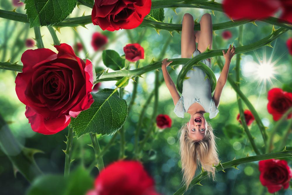 The rose's revenge.jpg