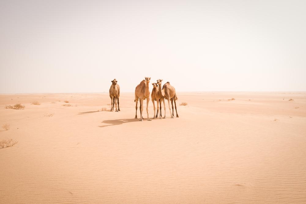 mauritania_jodymacdonaldphotography4.jpg