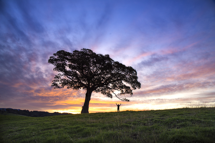 william_Patino_Tree.jpg