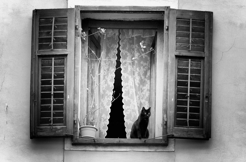 Gatto alla finestra.jpg